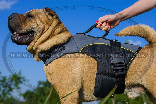 Dog Harness for Shar-Pei