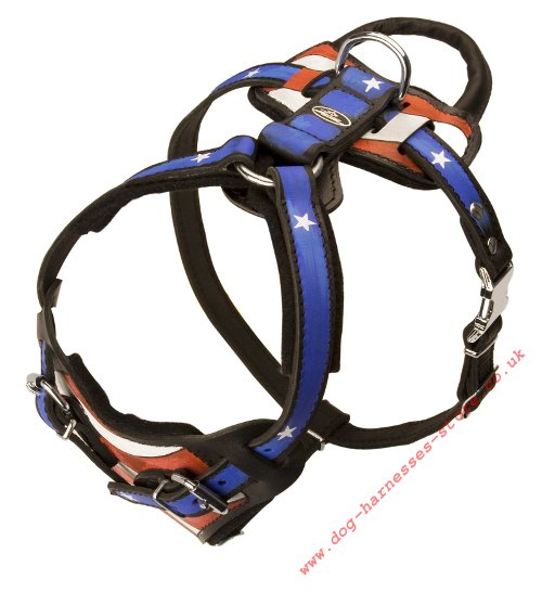 Stars and Stripes Dog Harness UK, USA