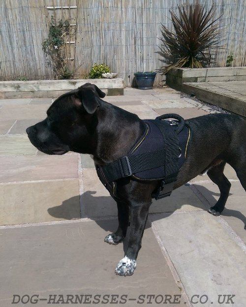 Nylon Dog Harness for Sale