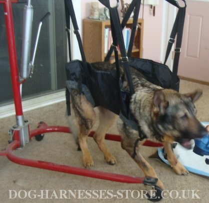Dog Support Harness UK