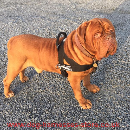 Identification Dog Harness