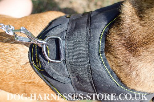 Harness for Dogo Canario UK
