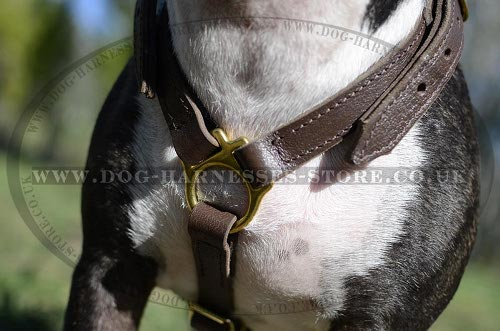 English Bull Terrier Harness UK