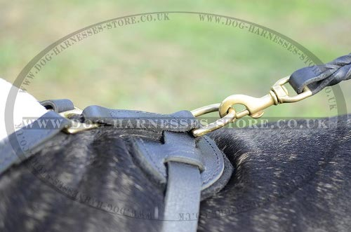 English Bull Terrier Leather Harness