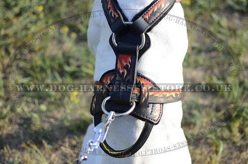 English Pointer Harness with Fiery Drawing