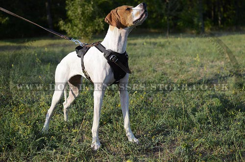 English Pointer Harnesses UK