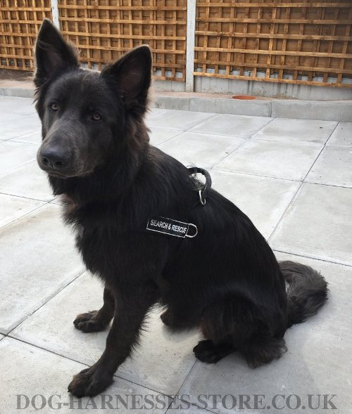 German Shepherd Harness for Sale UK