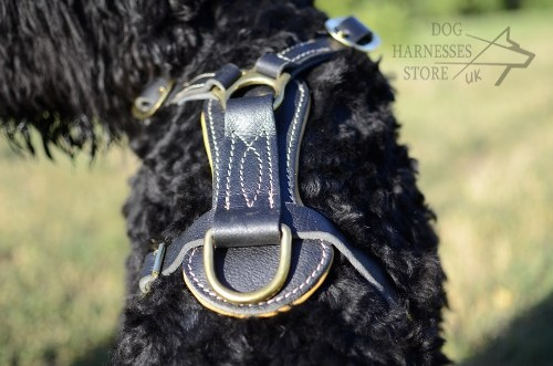 Giant Black Russian Terrier Harness