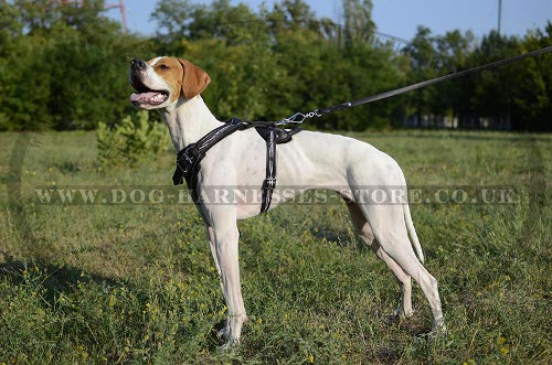 Harness for Pointer UK Unique