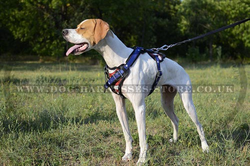 English Pointer Harness UK