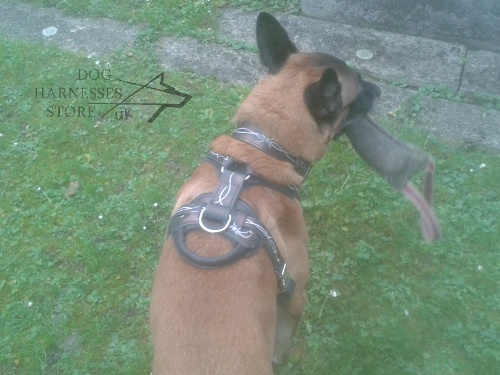 Handmade Dog Harness
