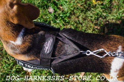 Harness for a Beagle