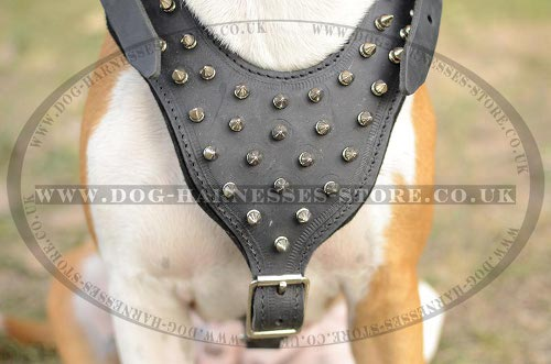 Harness for Amstaff, Leather with Spikes
