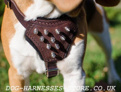 Harness for Beagle Puppy