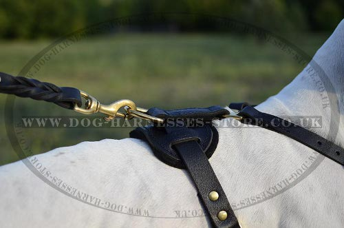 Harness for English Pointer