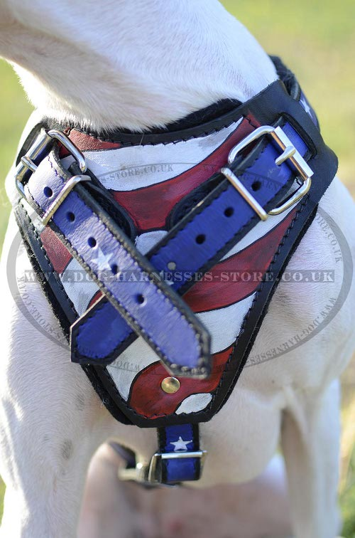 Harness for English Pointer UK