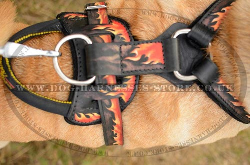 Harness for Shar-Pei UK