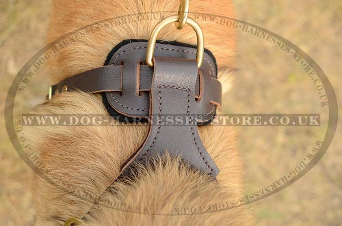 Harness for Tervuren UK