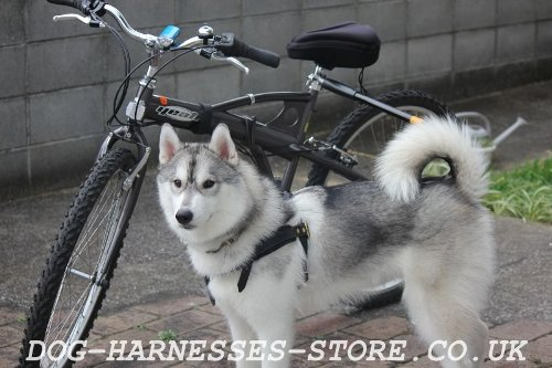 Husky Harness for Bike