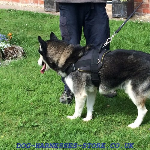 Husky Dog Harness UK