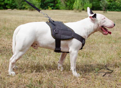 Nylon Harness for English Bull Terriers
