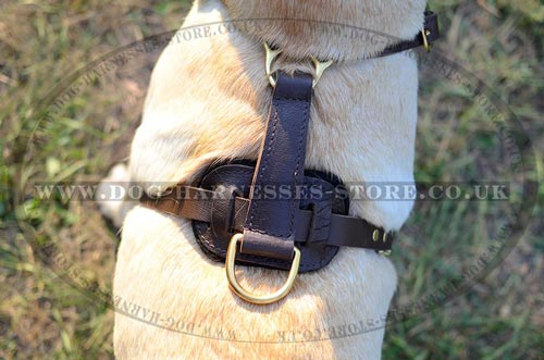 Walking Dog Harness