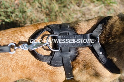Leather Dog Harness for Cane Corso UK