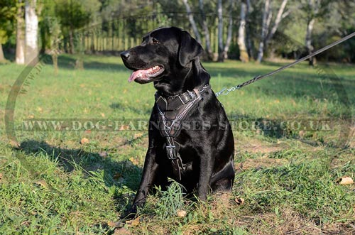 Leather Dog Harness for Labrador