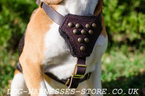 Leather Dog Harness UK