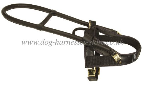 leather dog harness for guide dog