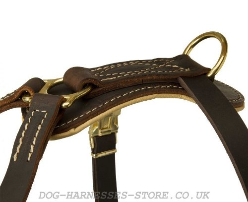 Luxury Dog Harnesses UK