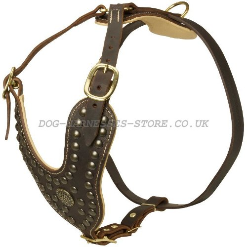 Studded Dog Harnesses