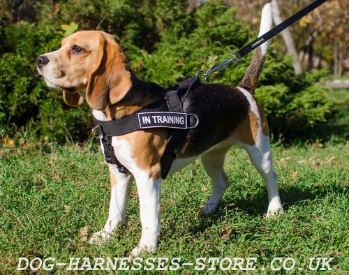 Dog Harness for Beagles