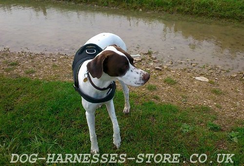 English Pointer Dog Harness UK