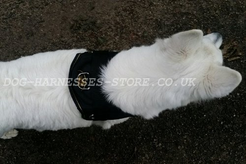 White Swiss Shepherd Dogs UK