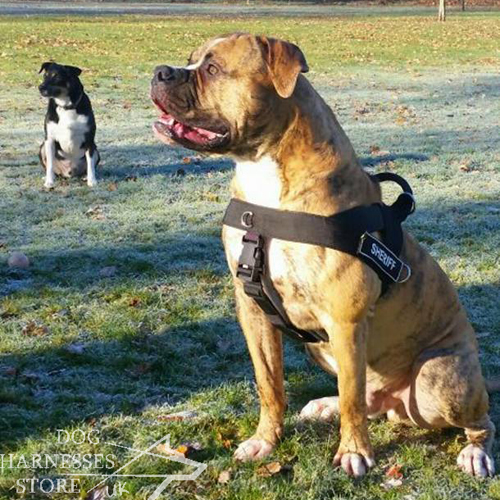 UK Working Dog Harness