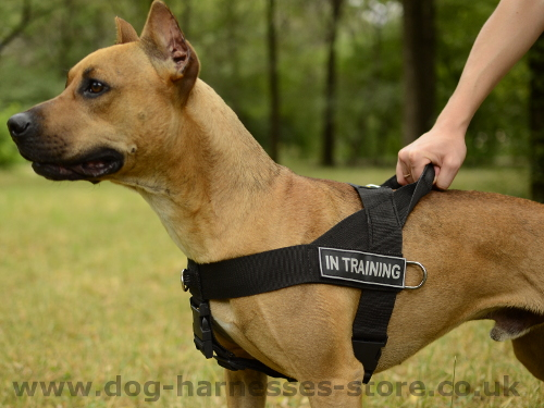 Training Dog Harness