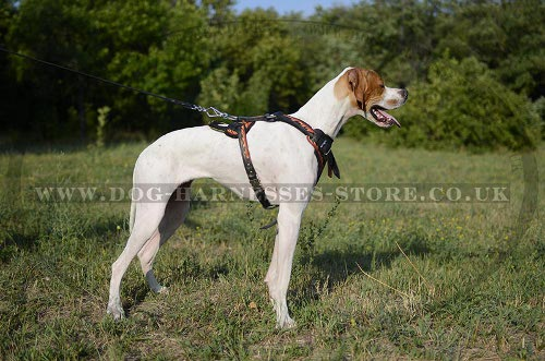 Pointer Dog Harness Flame-Coloured