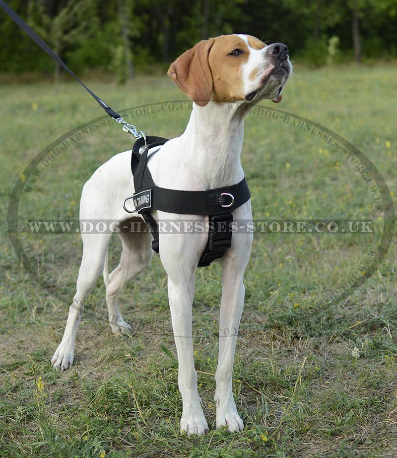 English Pointer Harness Nylon ID