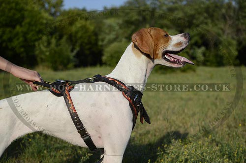Pointer Dog Harness of Flaming Style