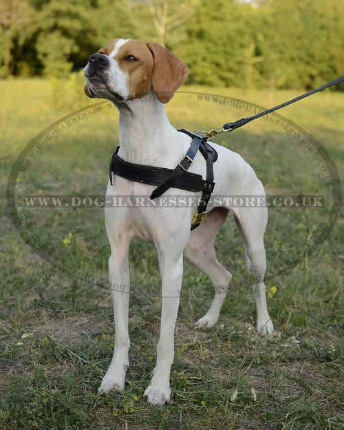 Weight Pulling Dog Harness for Sale
