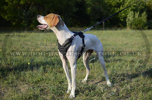 Pointer Harness