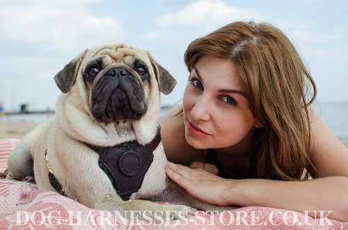 Pug Dog Harness UK