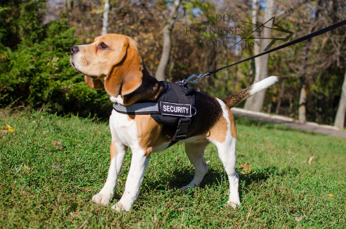 Reflective Dog Harness UK