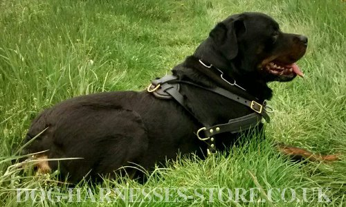 Rottweiler Harness for Sale UK