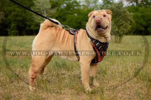Shar-Pei Dog Harness UK