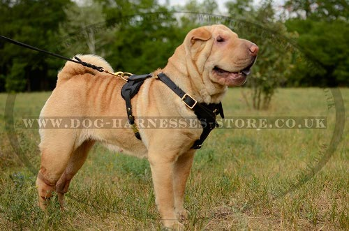 Dog Walking Harness UK