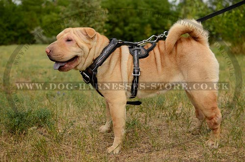 Shar-Pei Harness Buy UK