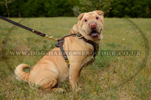 Shar-Pei Leather Harness
