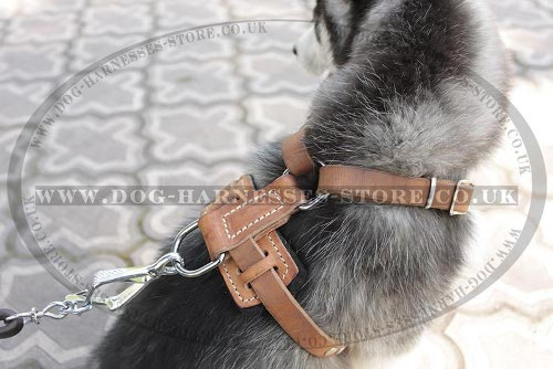 Dog Walking Control Harness